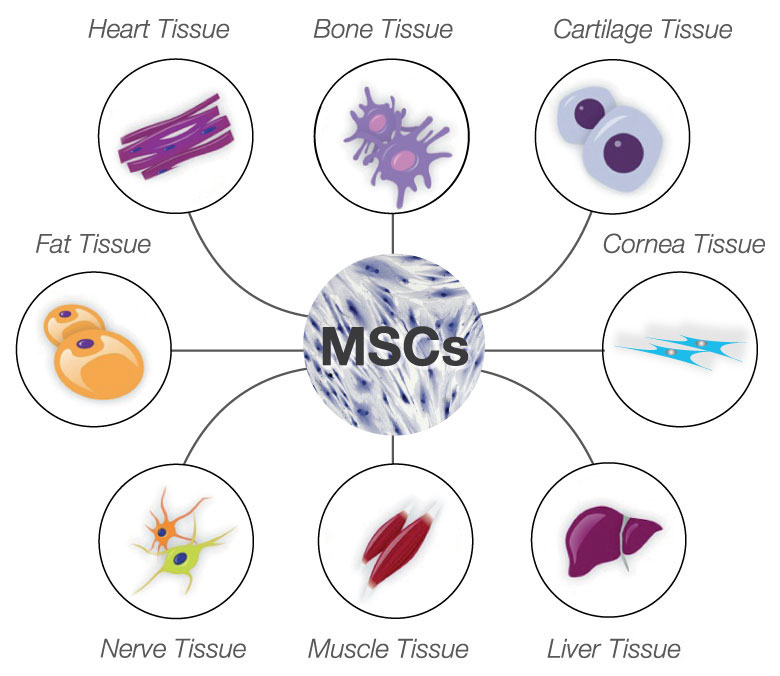Stem cell therapy for animal treatment