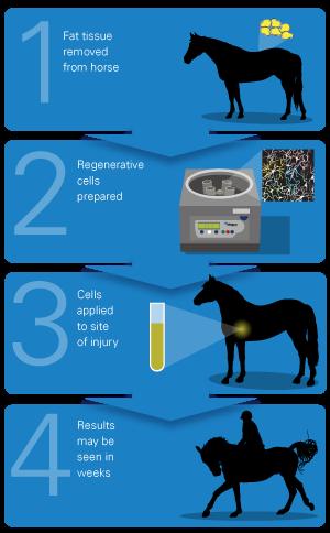 Zirgu ārstniecība ar cilmes šūnu terapiju