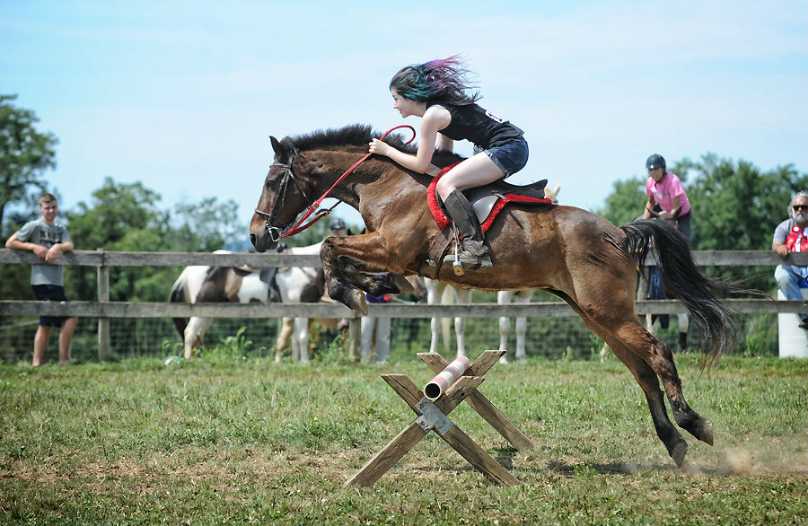 Horse Stem Cell Therapy