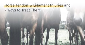 Medrego horse tendon and ligament Injuries and 7 ways to treat them Sport Horses Regeneration Stem Cells Treatment or Therapy