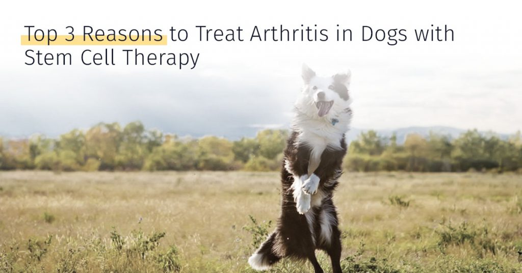 treat arthritis in dogs
