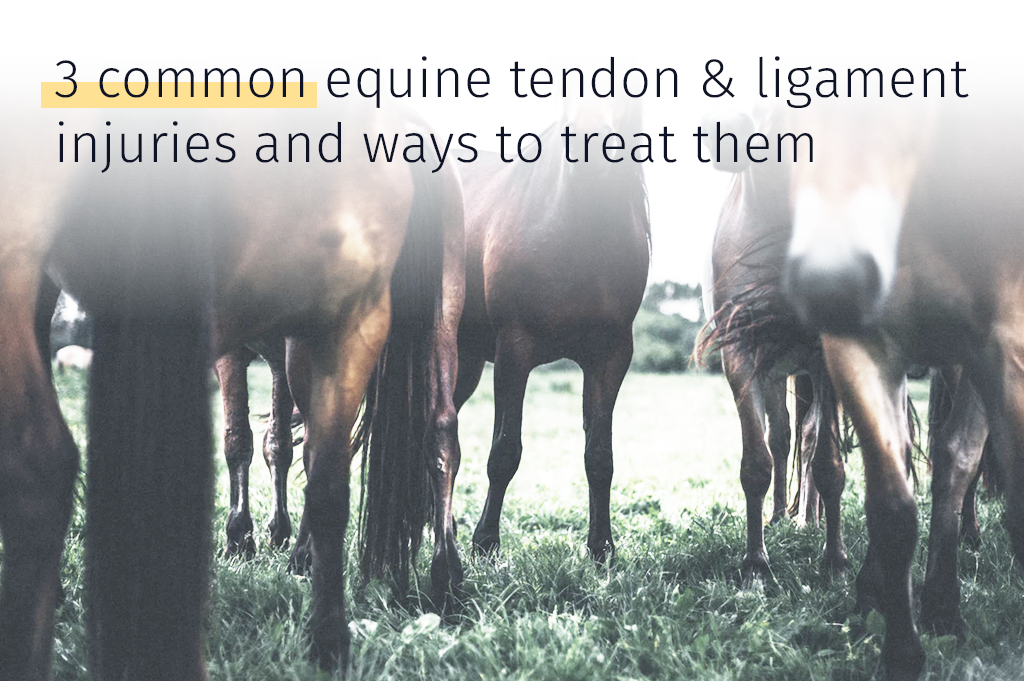 horse tendon injury
