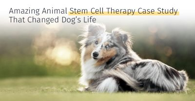 Animal stem cell therapy case study that changed dogs life