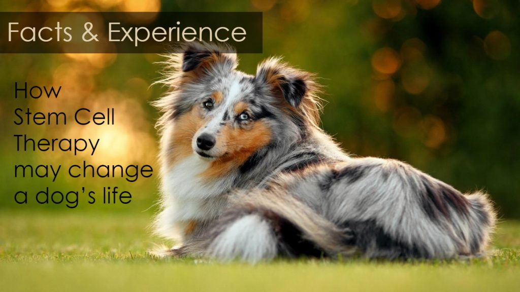 animal stem cell therapy case study