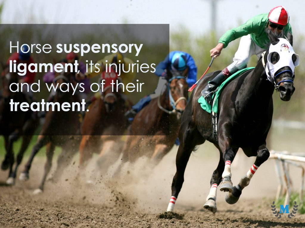 suspensory ligament injury in horses