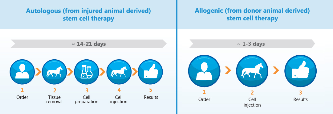 Animal Stem Cell Therapy types