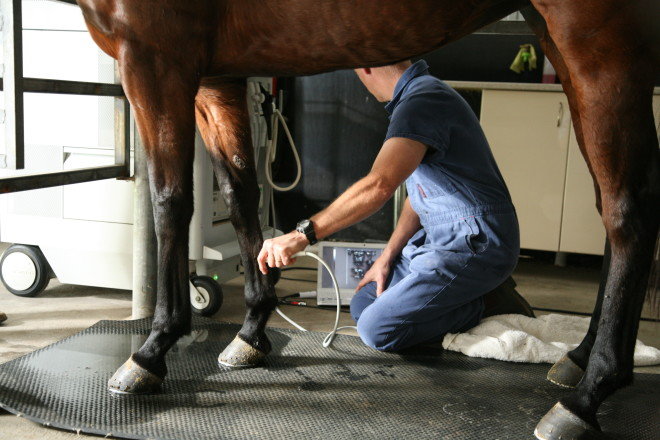 Horse suspensory ligament treatment with stem cell therapy