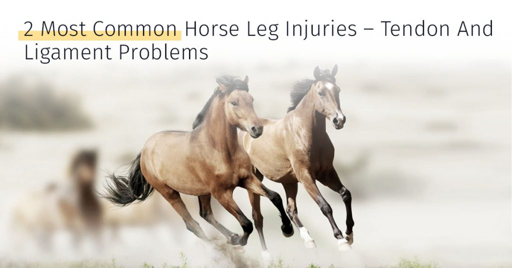 2 most common horse leg injuries tendon and ligament problems