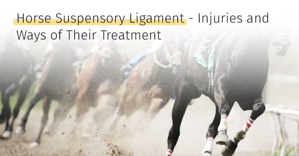 Suspensory Ligament Injury In Horses And The Treatment