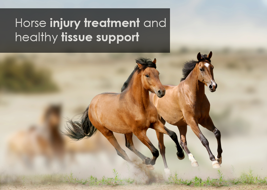 horse tendon and ligament injury treatment with Medrego stem cell therapy and tissue support