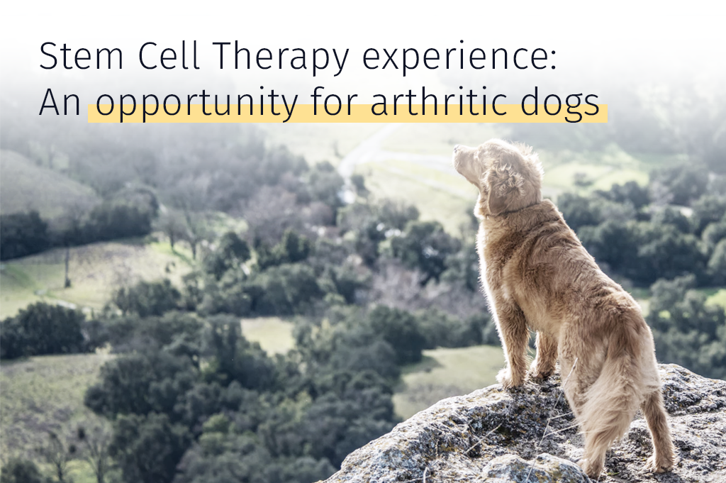 Medrego Opportunity For Arthritic Dogs Stem cell therapy experience Success case Arthritis in Dogs Canine joint problems Inflammation Canine