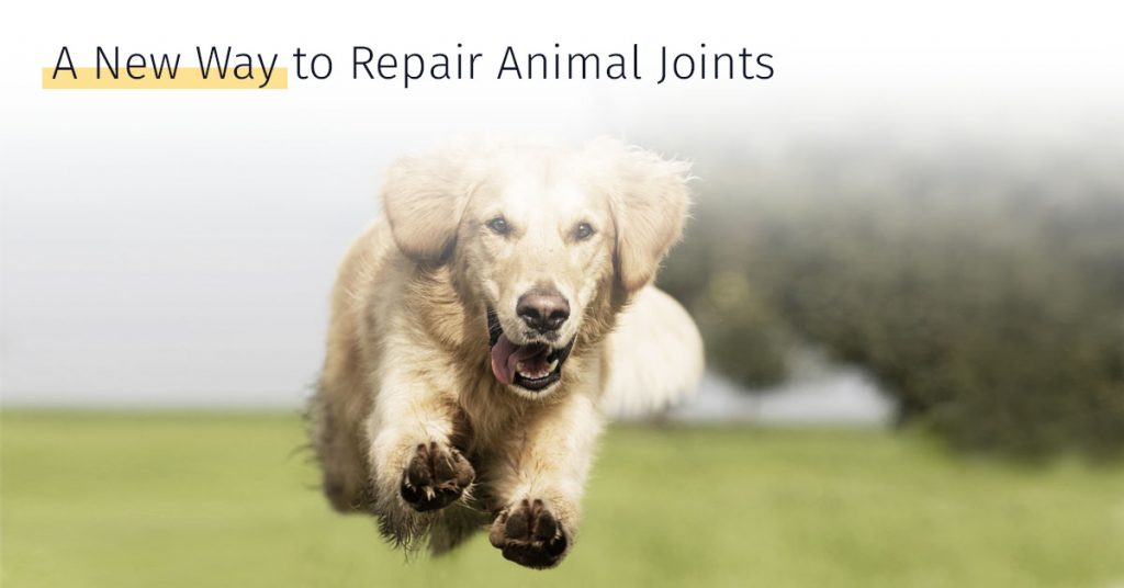 A new way to repair animal joints stem cell therapy canicell