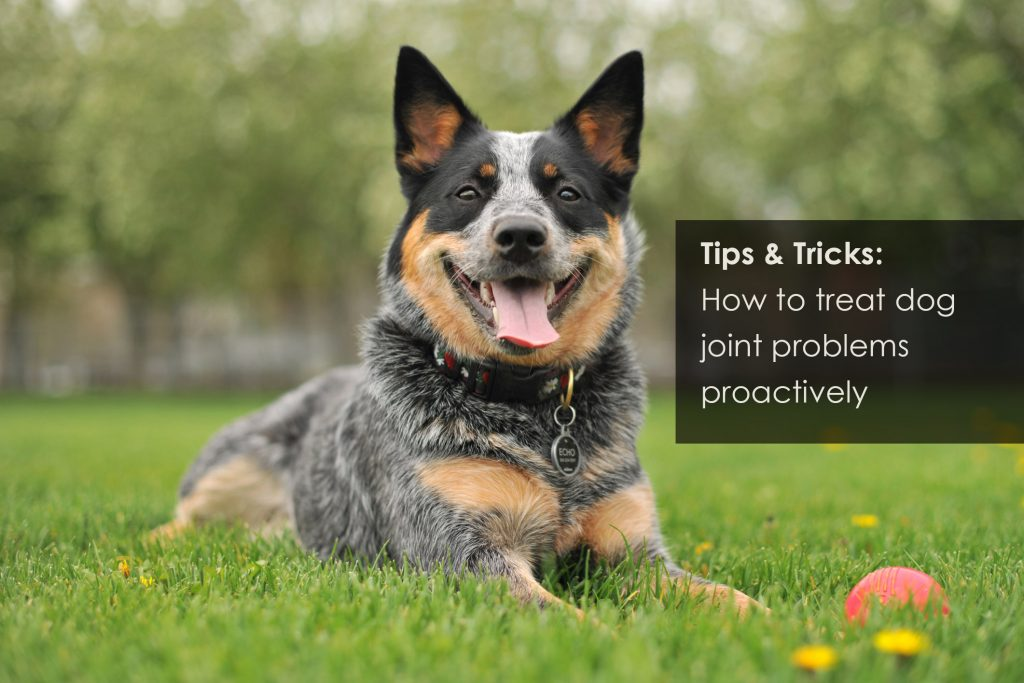 How to treat dog joins proactively arthritis