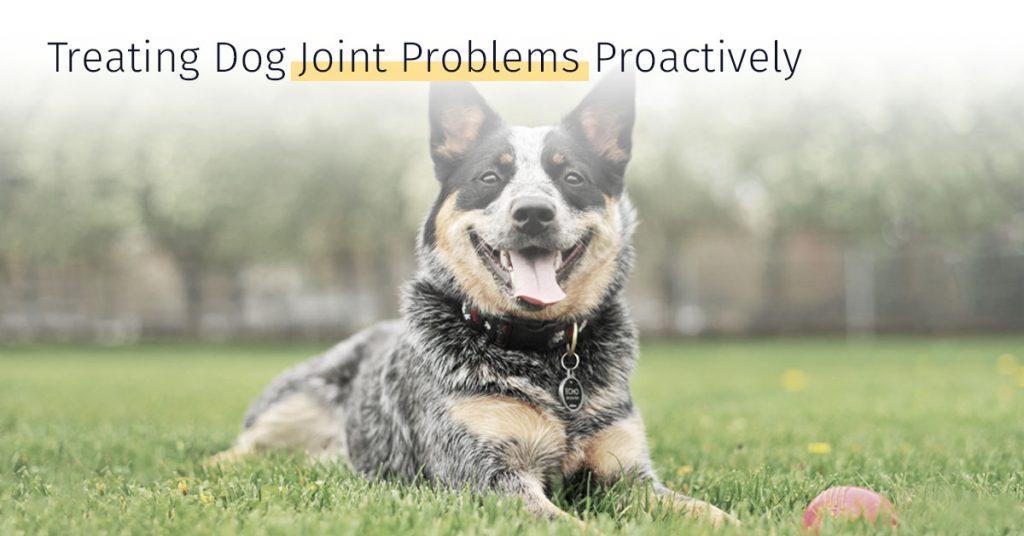 Treating Dog Joint Problems Proactively stem cells medrego