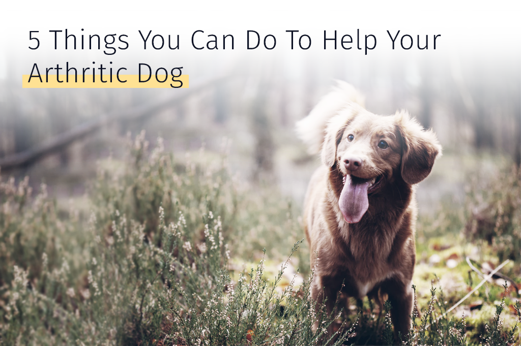 Medrego 5 Things You Can Do To Help Your Arthritic Dog Arthritis in Dogs Canine joint problems Hip dysplasia Dog inflammation