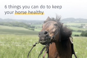 how to keep a horse healthy