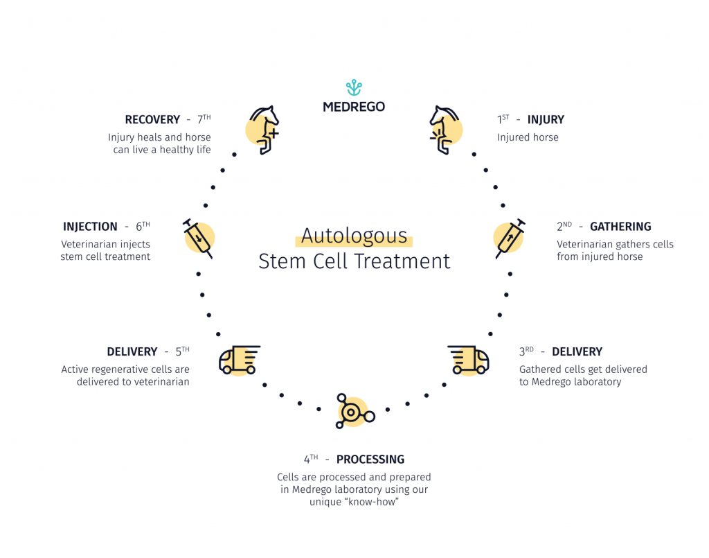 Medrego Infographic Animal Autologous Stem Cell Treatment How it works explainer Horse and Dog stem cell treatment