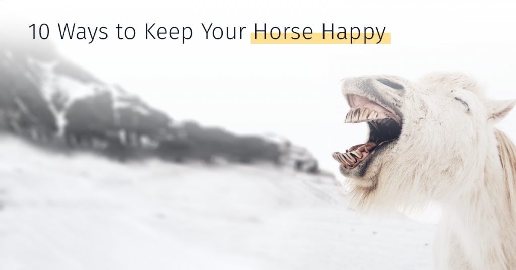 Medrego 10 Ways To Keep Your Horse Happy Equine performance Energy boost Regeneration Stem cells