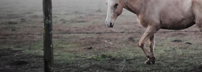 Horse care checklist