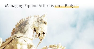 Equine Arthritis and osteoarthritis injuries, Treatment options, stem cell treatment