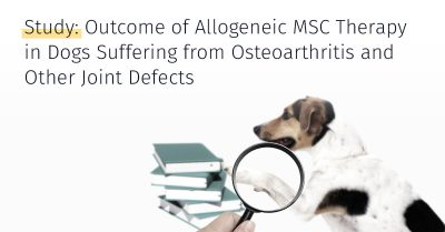 Allogeneic MSC Therapy in Dogs Suffering From Osteoarthritis and Other Joint Defects, Treatment options, stem cell treatment