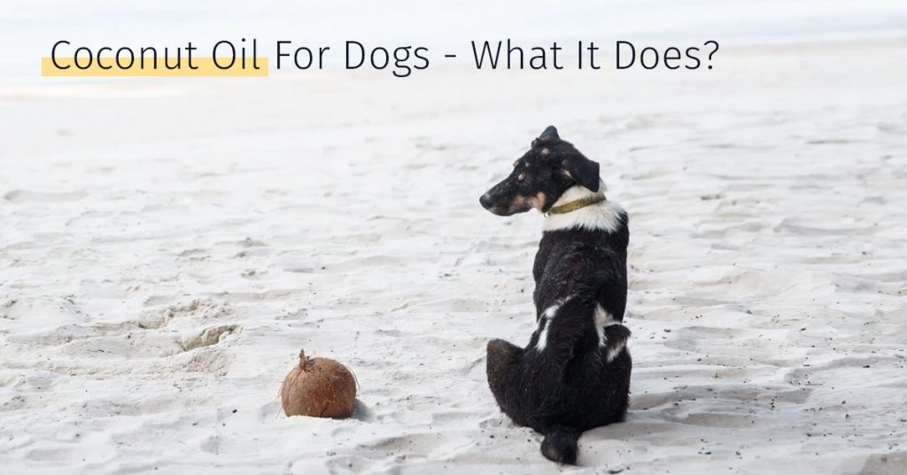 Coconut oil for dogs, stem cell treatment, canine treatment options, dog stem cell