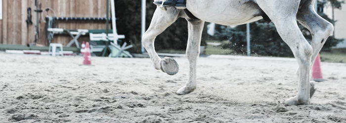 Ways to improve equine joint health, equine excercise joint treatment, exercise for horse joint strengthening