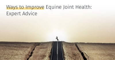 Ways to Improve Equine Joint Health, stem cell treatment, equine joint treatment, treatment options