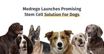 best dog arthritis therapy, medrego, canine stem cell treatment