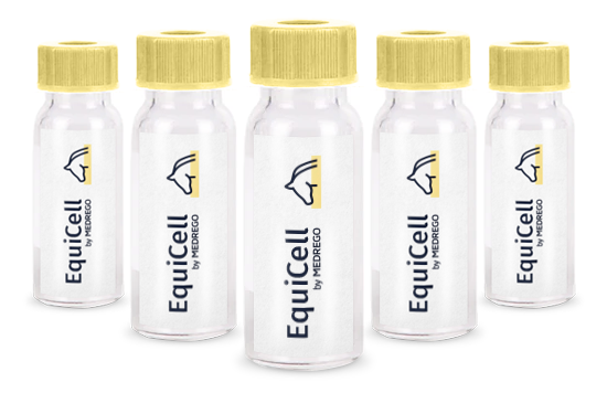equicell, medrego, stem cell therapy for horses, equine arthritis treatment