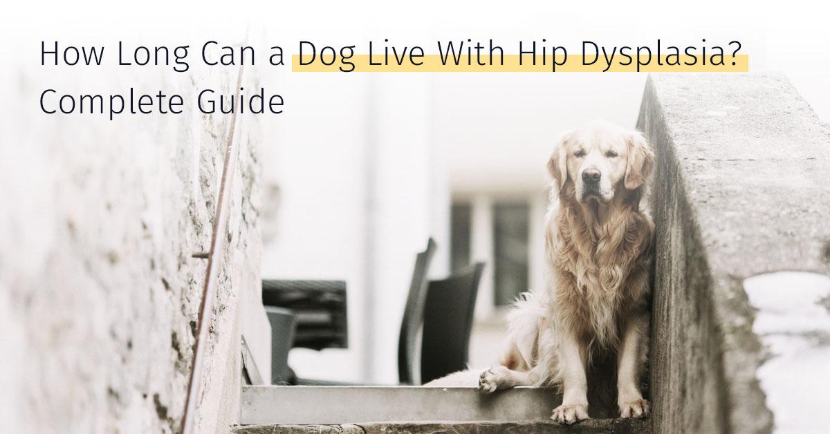 Dog Live With Hip Dysplasia