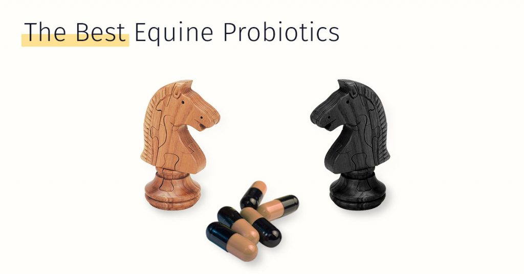 the best equine probiotics, horse stem cell treatment medrego, equicell