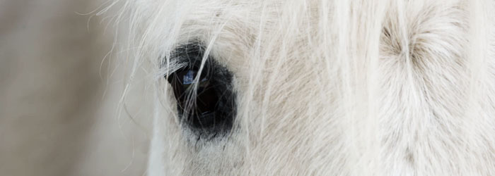 Equine Nerves, horse stem cell treatment