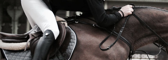 Horse rider body movement, equine stem cell therapy, equicell