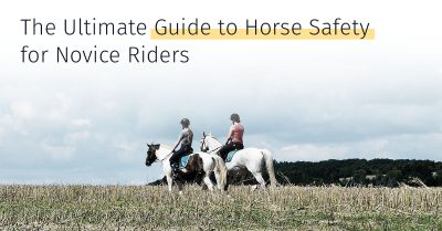 Guide to Horse Safety for Novice Riders, medrego, stem cell treatment, equicell