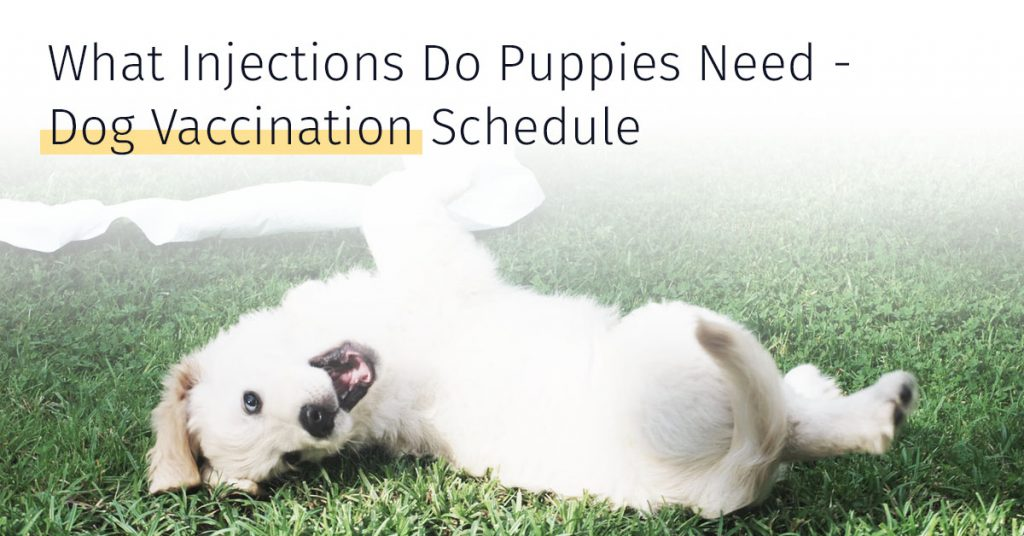 What Injections Do Puppies Need, Dog Vaccination Schedule, Medrego Stem Cell Therapy, CaniCell