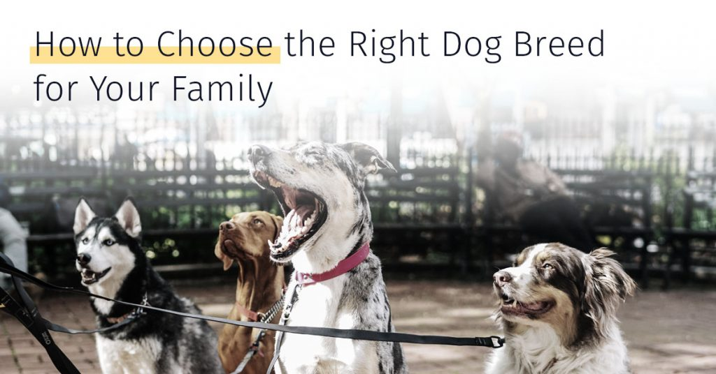how to choose the right dog breed for family, medrego canicell, stem cell therapy for dogs, canine