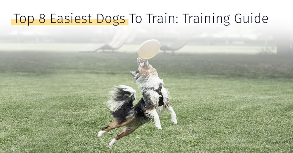 top 8 easiest dogs to train, dog training guide, canicell, dog stem cell therapy