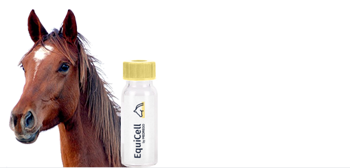 Medrego EquiCell product. Horse Stem Cell Therapy. Equine Tendon and Ligament.