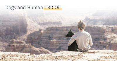 medrego stem cell therapy, canicell, CBD oil for dogs, calming oil for dog