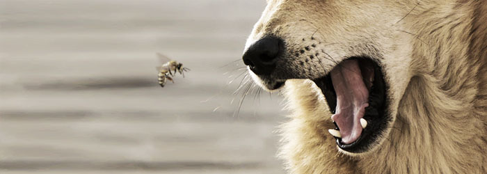 Protect your dog from dangerous insects