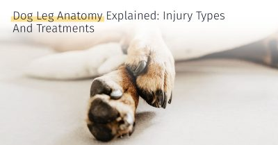 Dog leg anatomy injury and treatment stem cell therapy medrego canicell