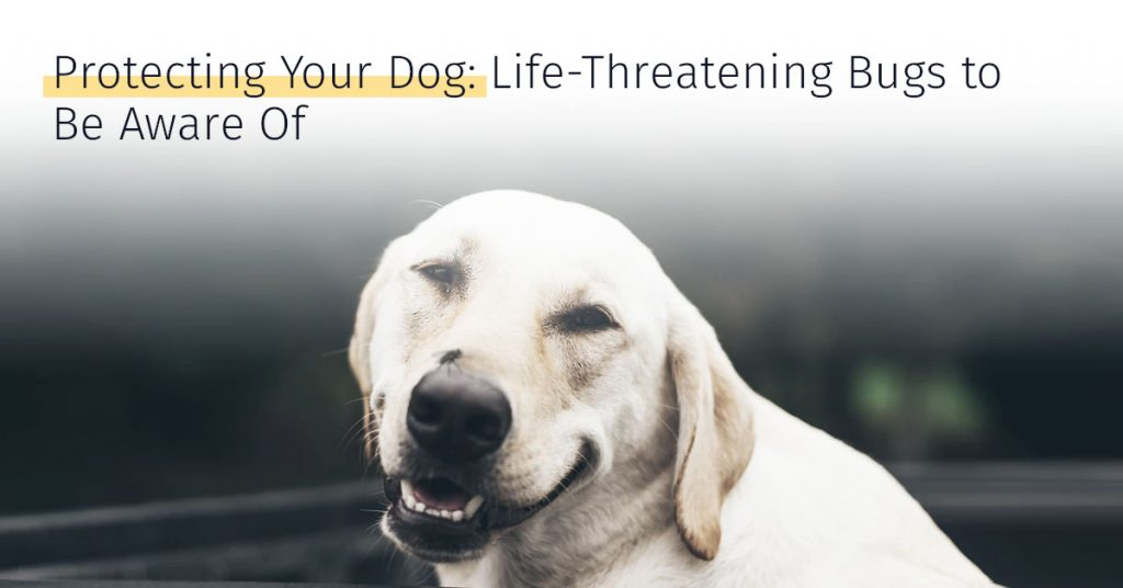 life-threatening bugs to dogs, canicell, stem cell therapy for dogs