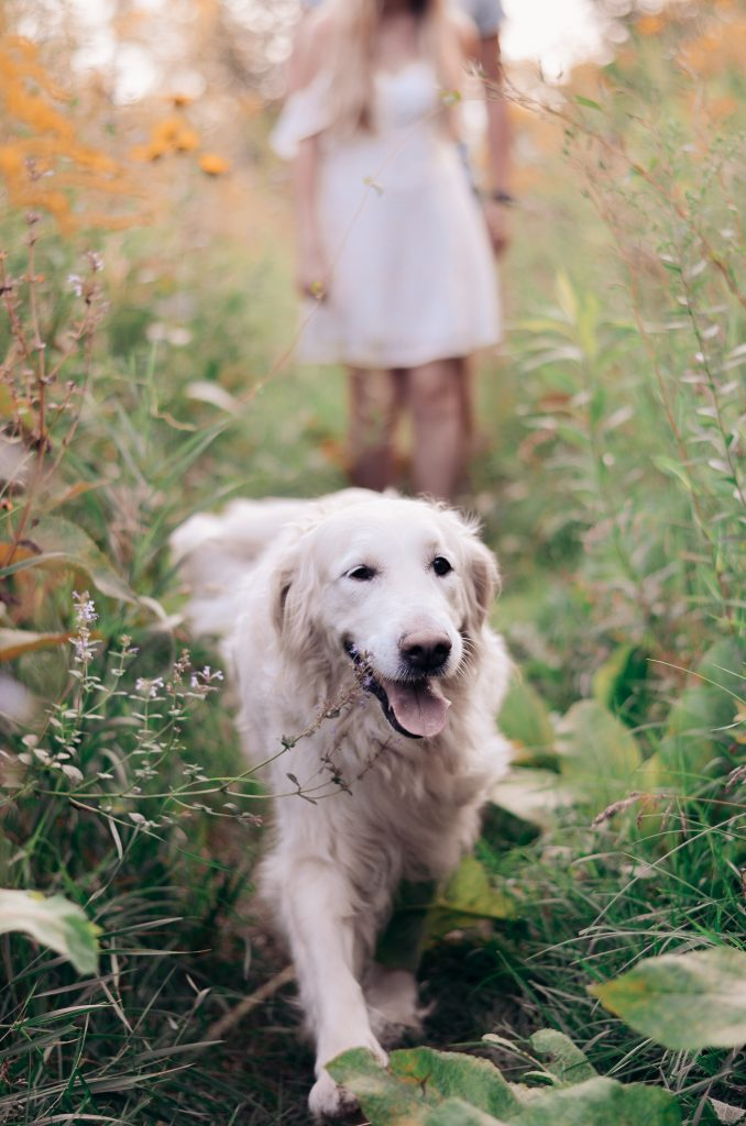 Most Effective Stem Cell Therapy For Dogs That Treat Arthritis