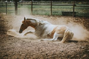 horse tendon and ligament injury