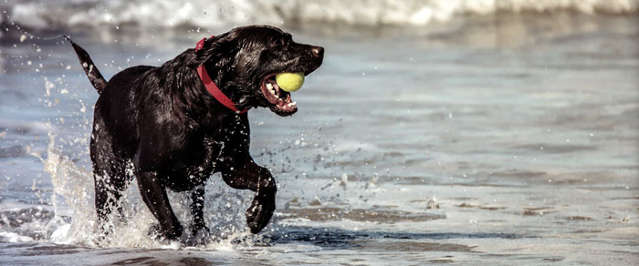 dog exercise and physical therapies stem cells medrego