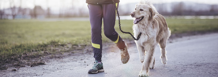 overweight dog 4 reasons why, dog and owner activity, stem cell therapy medrego