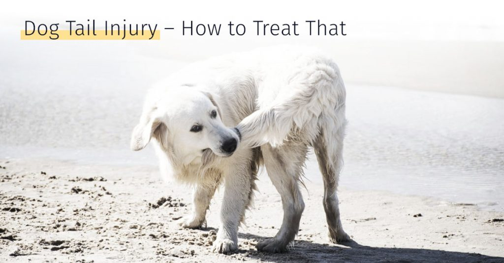 Dog tail injury how to treat that, stem cell therapy, medrego