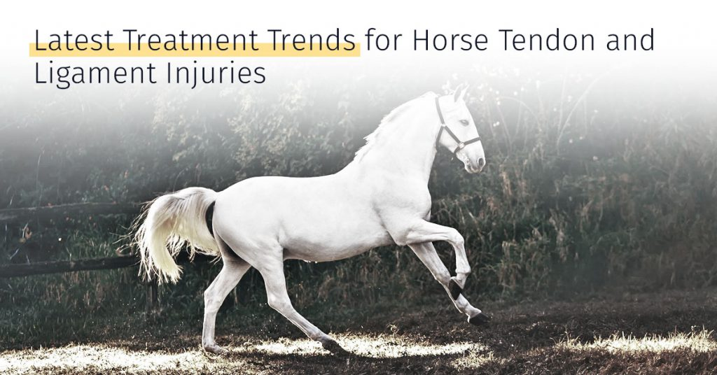 medrego latest treatment trends for horse tendon and ligament injuries stem cell therapy