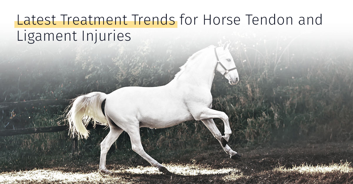 Latest Treatment Trends For Horse Tendon And Ligament Injuries Medrego